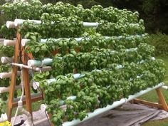 Have you heard of aquaponics? Aquaponics Combines the Growing of Fish and Plants You may grow plants in water and without soil and once one does this together with growing fish you are practicing aquaponics. Hydroponic Farming, Hydroponic Growing, Aquaponics System, Backyard Aquaponics, Aquaponics Plants, Diy Hydroponics, Vertical Garden Diy, Vertical Planter, Vertical Gardens