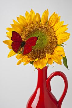 Red Butterfly On Sunflower On Red Pitcher Photograph - Red Butterfly On Sunflower On Red Pitcher Fine Art Print