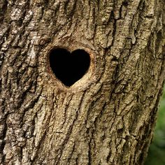 Mother Nature creatures a heart in the bark of this tree.....awesome, love it!! hearts-naturally