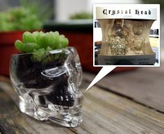 Cut the top off (or just use the cups from the box set) and use as a planter.