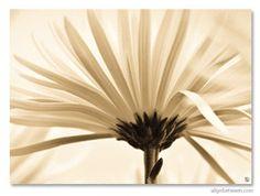 Dandelion, Canvas Prints, Fall, Pretty, Nature, Flowers, Plants, Autumn, Naturaleza