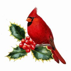 Portfolio of Krzysztof Kowalski's watercolor paintings. Take a look at beautiful nature inspired watercolor paintings. Christmas Scenes, Christmas Art, Xmas, Christmas Clipart, Christmas Ornament, Watercolor Bird, Watercolor Paintings, Bird Paintings, Bird Template