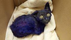 Este gato, usado como cebo de peleas de perros, se ha rehabilitado gracias al amor