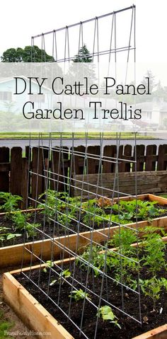 How to transform a cattle panel into a garden trellis. The trellis is so easy to make and really sturdy. Great for growing vegetables vertically | Frugal Family Home