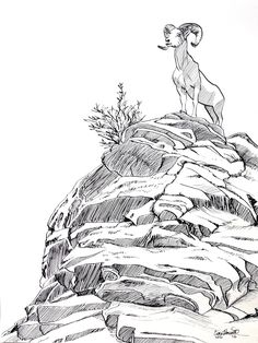 Mountain Goat Ink Drawing by Ciara Barsotti - created without pencil, just ink!
