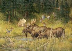 October Rendezvous, Wildlife moose art by Larry E. Wildlife Paintings, Wildlife Art, Bull Moose, Moose Art, Moose Hunting, Deer Art, Nature Artists, Your Spirit Animal, Outdoor Art