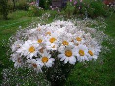 százszorszép virágok - 31