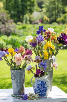Irises are wonderful choices for fresh-cut arrangements. It's best to gather them early in the morning, when they are still moist with dew, placing them in a bucket of water to keep stems wet. Next, fill a vase with cold water. Using cutting shears, clip stems again at a 45-degree angle and immediately place in the vase. These vibrantly hued beauties will last for days, bestowing a bit of spring's botanical largesse for all to enjoy.