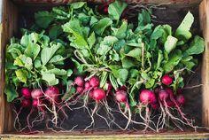 farmers market radishes by hannah * honey & jam, via Flickr