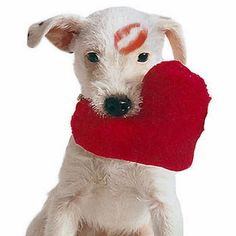 """Anyone can catch your eye, but it takes someone special to catch your heart <3 """"Happy Valentines to all the Sweet Doggies out there"""" <3"""