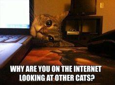funny-cats-on-the-internet.jpg 620×458 pikseliä