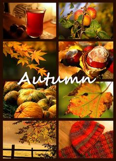 Autumn leaves falling, warm crusty homemade bread and a homemade stew, apples falling and the birds and squirrels collecting and eating as they get ready for winter. So colourful and nature is amazing