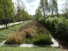 Parc Clichy-Batignolles - Paris (17th)