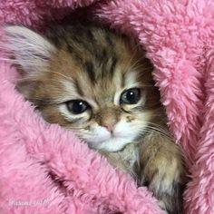 Sweet fur baby!!❤❤