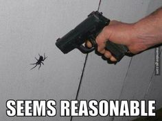 HATE spiders. Gods creation or genetic mutation?