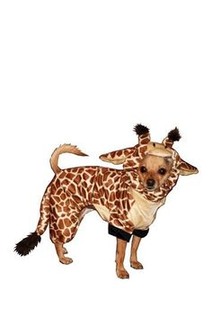 Puppy Giraffe Costume @Gretal Ehrhard  you need this for Gus!