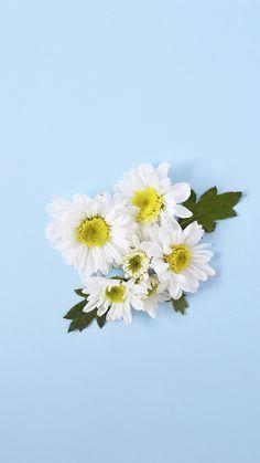 Flowers iPhone 6s.jpg - Box