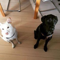 おはようございます🌞ケミストリーみたい✨#dogstagram #イヌフルエンサー #愛犬 #仲良し#dogs #blackandwhite #chemistry