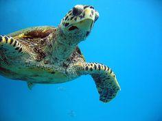 Molokai Snorkeling with Sea turtles
