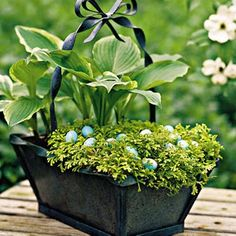 love the hosta and little easter eggs - this would be cute to set on the front porch bench