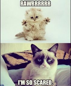 Grumpy Cat humor ...For more funny pics and hilarious memes visit www.bestfunnyjokes4u.com/rofl-funny-pic-of-the-day-8/