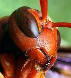 macro photo insect eyes