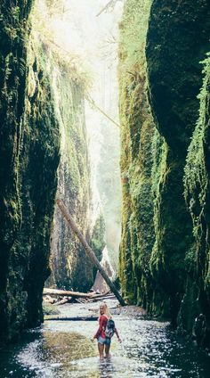 So this is definitely Fern Canyon near Brookings in along the Southern Oregon coast in case anyone was confused by the original caption.😏 *Hiking the Oneonta gorge falls by Portland, Oregon* Oregon Road Trip, Oregon Travel, Travel Usa, Oregon Hiking, Portland Oregon Hikes, Backpacking Oregon, Travel Packing, Beach Travel, Oregon Coast Roadtrip