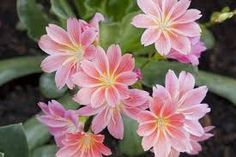 Helping Nature through Organic Gardening Creeping Phlox, Garden Catalogs, Drought Tolerant Landscape, Greenhouse Gardening, Gardening Tips, How To Attract Birds, Buy Plants, Hens And Chicks, Types Of Soil