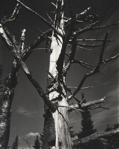 Paul Strand (American, 1890–1976), Dead Tree, Vermont, 1945 (negative) / early to mid-1980s (print), gelatin silver print, 9 5/8 × 7 5/8 inches. Philadelphia Museum of Art, The Paul Strand Collection, partial and promised gift of Marguerite and Gerry Lenfest, 2009-160-842. © Paul Strand Archive/Aperture Foundation
