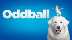 Oddball's story was made into a feature film in 2015, with the plot focussing on an eccentric chicken farmer who trained dogs to protect penguins from foxes. | Oddball, The Dog Who Protected Penguins, Has Died Aged 15