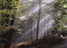 Nibelungensteig Odenwald