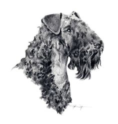 drawings of dogs | KERRY BLUE TERRIER Dog Pencil Drawing ART Print Signed by Artist DJ ...