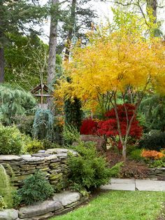 Screen Views - Add depth and mystery to your landscape by using large shrubs and small trees to block views. Because you can't to see the entire yard from one spot, you create the sense that your garden goes on and on. Here, a brilliant golden Japanese maple makes you want to check out what's on the other side of it