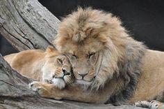 The Lion & Lioness....me & my man! <3