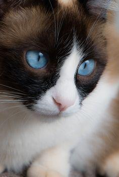 Photograph blue eyes by Savio Araujo on 500px