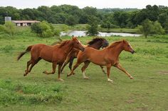 Running Horses by unwiredadventures, via Flickr