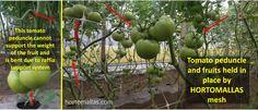 Trellis, Farmer, Canning, Vegetables, Plants, Harvest, Farmers, Vegetable Recipes, Plant
