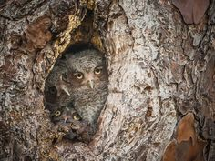 Graham McGeorge / The Comedy Wildlife Photography Awards
