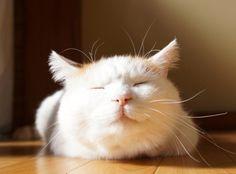 Wish I had a sweet kitty like you, Shironeko