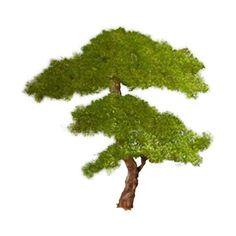 Виктория Joy — альбом «●Скрап-наборы (PNG)● / ●ஐСказочные ஐ● / Secret... ❤ liked on Polyvore featuring landscape and plants