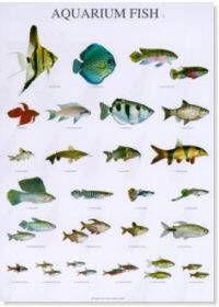 vis soorten aquarium