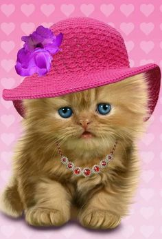 Persian Cat For Sale Kitten Kitten Images, Puppy Images, Animals And Pets, Funny Animals, Cute Animals, Pretty Cats, Beautiful Cats, Cute Cats And Kittens, Kittens Cutest