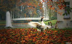 autumn joy    Bazel, Belgium