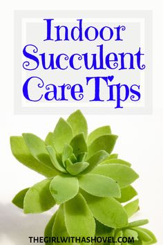 Excellent Gardening Ideas On Your Utilized Espresso Grounds How To Care For Succulents Indoors Succulent Care Houseplants Indoors Succulent Care In Winter Indoor Plant Care Tips Taking Care Of Succulents, Hanging Succulents, Growing Succulents, Succulents Garden, Indoor Succulents, Hanging Planters, Garden Plants, Succulent Soil, Succulent Bouquet