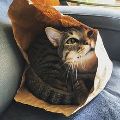 ❤ =^..^= ❤     Waiting for the cat to come out of the bag ... http://www.meowmoe.com/12