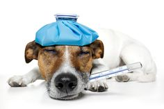 ObamaCare Hurts Man's Best Friend, Too | FreedomWorks
