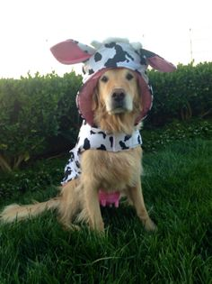 Almost time for #Halloween! This is an option for Alphie.