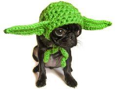 yoda puppy