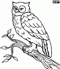 Free Owl Coloring Page Animal Pages 10 Printable