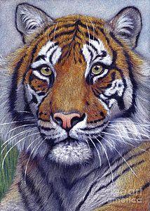 Tiger portrayal Canvas Print / Canvas Art by Svetlana Ledneva-Schukina Big Cats, Cats And Kittens, Cute Cats, Funny Cats, Animals And Pets, Baby Animals, Cute Animals, Beautiful Cats, Animals Beautiful